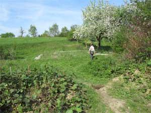 Grundstück mit vielen Obstbäumen