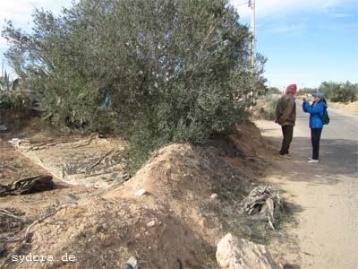 Nelia Sydoriak-Rauch  bei einem Gespräch mit einen Tunesier bei der Olivenernte